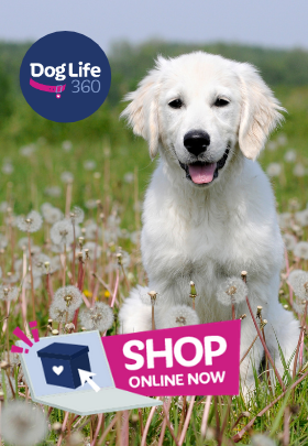 Shop online, white puppy in a field of flowers
