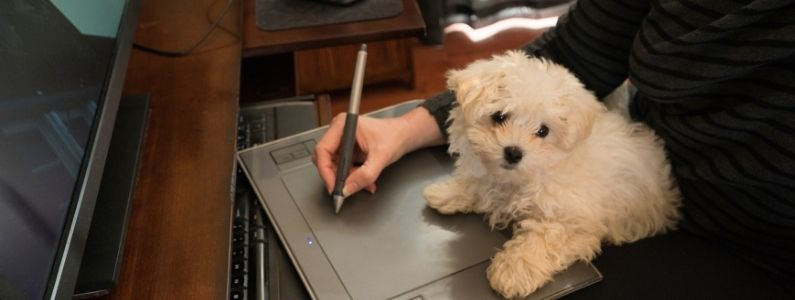 white puppy sits on desk while woman works at computer