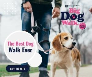 Big Dog Walk _03