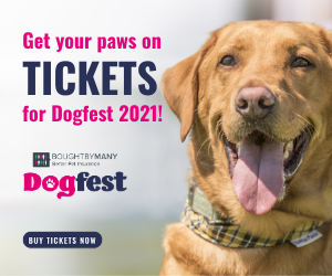 Brown Happy Labrador - your paws on Tickets for DogFest 2021