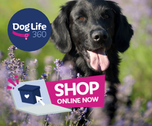 BLACK LAB IN FIELD OF PURPLE FLOWERS SHOP ONLINE DOGLIFE360