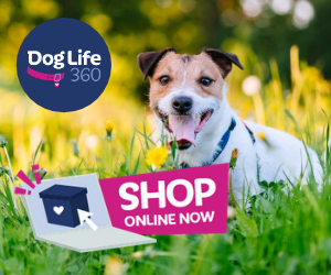 SHOP ONLINE AT DOGLIFE360  Jack Russell