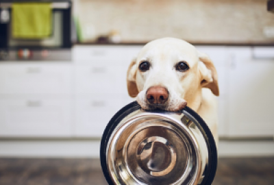 A hungry dog presents his bowl for feeding