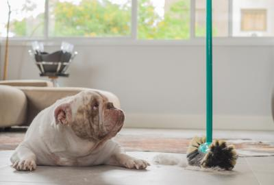 8 Cleaning Hacks for Dog Parents