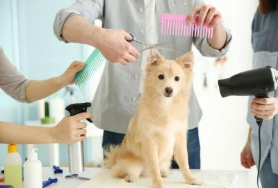 A dog is groomed by many groomers