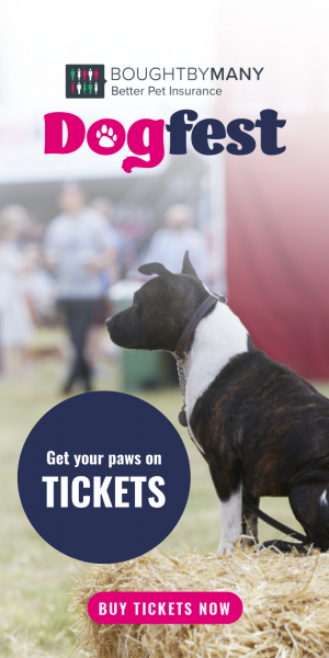 DF Staffie - Get your paws on tickets