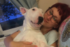 Lucy cuddles Ivy, the Bull Terrier