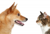 cat and dog stare at each other